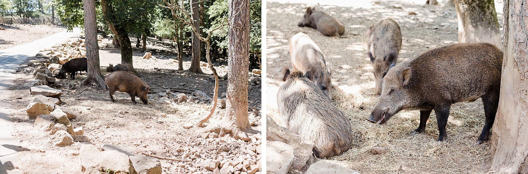 Visite du domaine des Grottes de Han en safari-car
